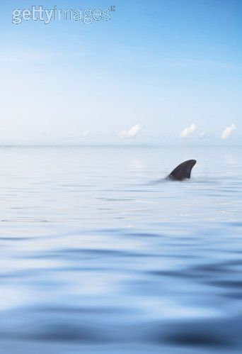delfines-carmen.jpg